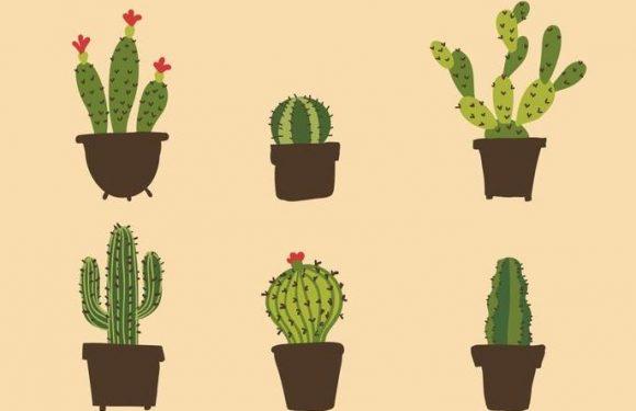 """Cercasi volontari per """"Il Cactus delle Resilienza"""", l'iniziativa a sostegno dei Care Leavers"""