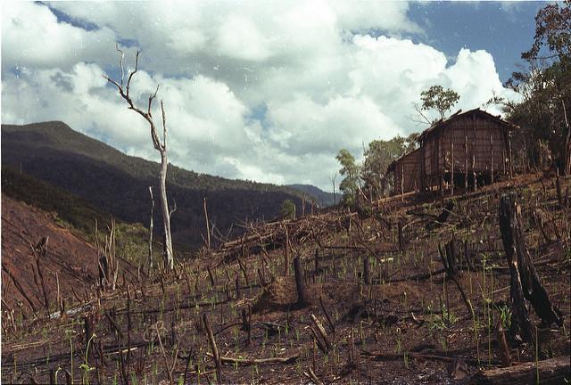 a quale prezzo, deforestazione
