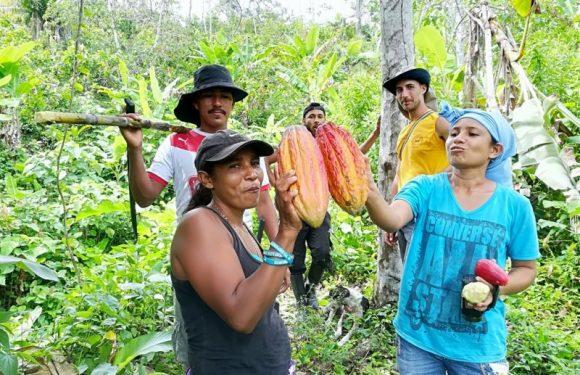"""""""Chocopaz"""": il cacao colombiano nonviolento (che resiste al narcotraffico)"""