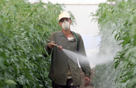 Sui pesticidi le norme in vigore non bastano a tutelare salute e ambiente