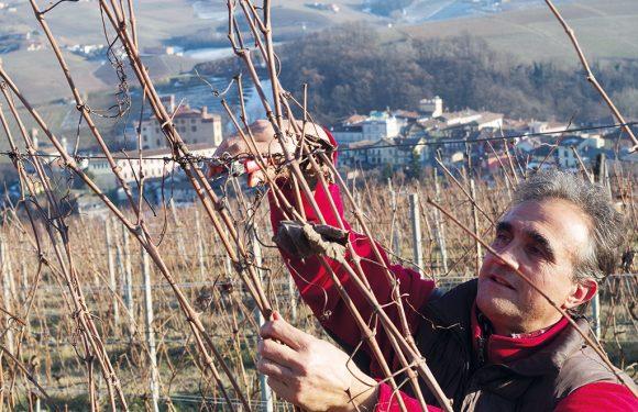 """I """"vini umani"""" di MiVino: lo specchio fedele del territorio e dei suoi vignaioli resistenti"""