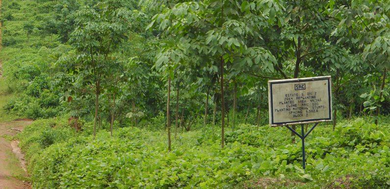 Olio di palma e land grabbing in Africa: Bolloré di nuovo sotto accusa