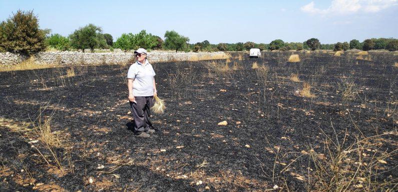"""Dopo l'incendio che ha distrutto i campi bio scatta la solidarietà per """"Perniola Alimenti"""""""