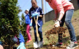60 milioni di alberi, la campagna nazionale promossa dalla Comunità Laudato sì