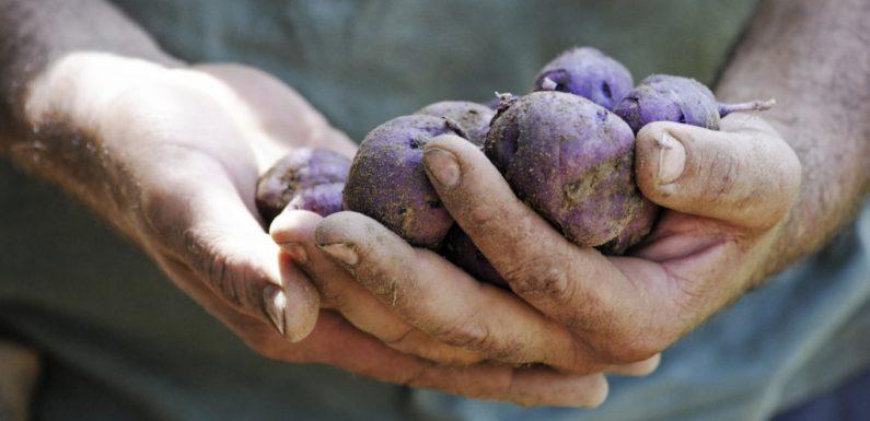 La biodiversità agricola e la salute del Pianeta