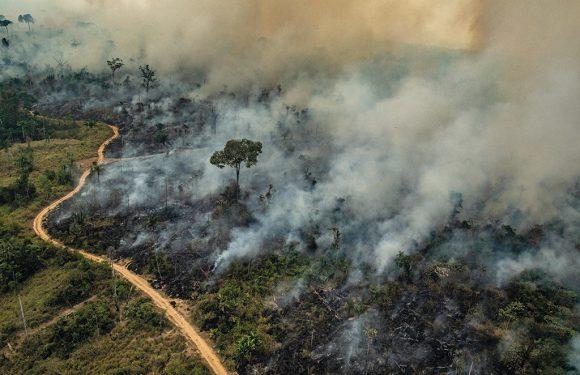 """Reportage dall'Amazzonia brasiliana dove è in corso una """"guerra di conquista"""" contro i popoli indigeni"""