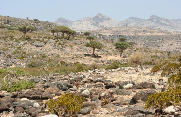 Socotra, l'isola-giardino minacciata dalla guerra in Yemen