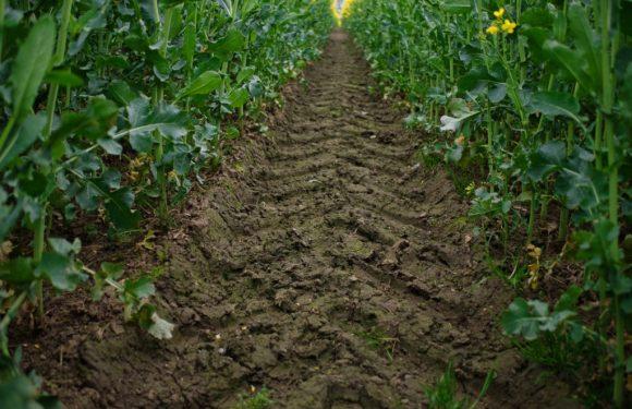 Anche la Corte dei Conti riconosce che il consumo di suolo mette in ginocchio il Paese