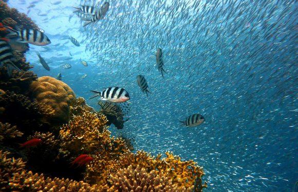 Gli oceani nel mondo stanno perdendo ossigeno a causa dei cambiamenti climatici
