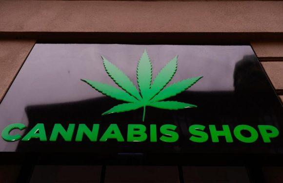 La delirante propaganda contro la cannabis light