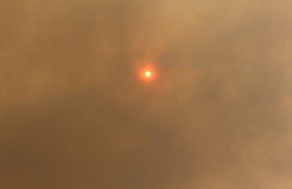 In l'Australia dopo gli incendi non sarà un'estate come le altre