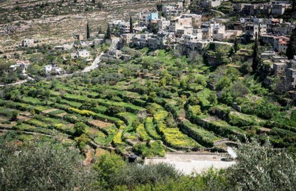"""Palestina, la sfida di Battir """"il villaggio dell'Intifada verde"""""""