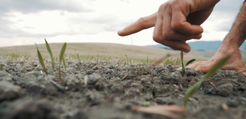 """""""Cereali, rinascimento in campo"""". Il documentario che racconta la rivoluzione agricola europea"""