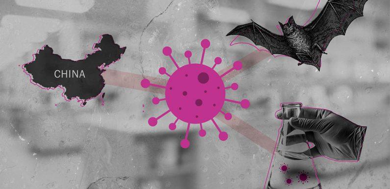 Dal laboratorio ai pipistrelli: le ipotesi sull'origine del nuovo coronavirus. Cosa dice la scienza