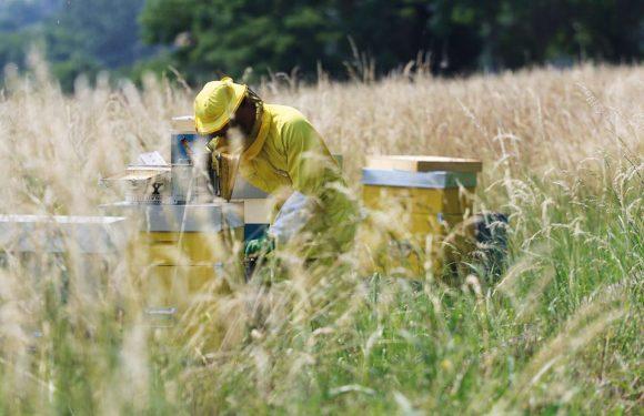 I biodistretti che tutelano i territori e fanno fiorire nuove economie