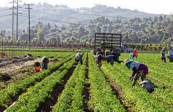 Regolarizzare lavoratori migranti. Un'opportunità nell'epoca della pandemia