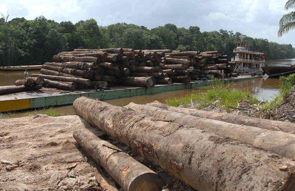 Brasile, crisi ambientale e crisi sanitaria sono collegate. Gli attivisti portano Bolsonaro in tribunale