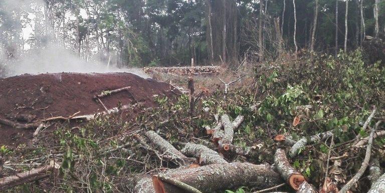 Il fragile ecosistema forestale dell'Uganda rischia di essere distrutto per produrre zucchero