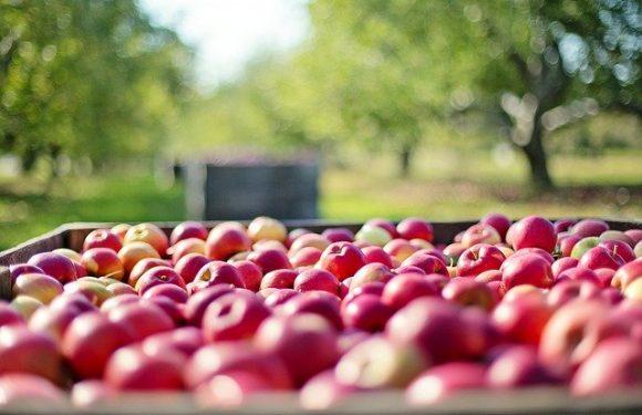Le mele dell'accoglienza e dei diritti