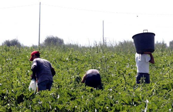 Regolarizzazione dei lavoratori immigrati: servono ritocchi al decreto