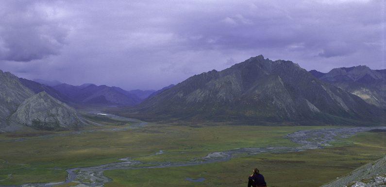 USA, Trump autorizza le perforazioni petrolifere nell'Arctic National Wildlife Refuge, un habitat naturale di oltre 270 specie diverse