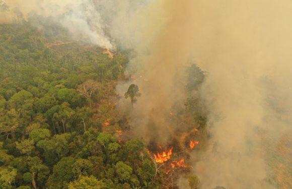 La tragedia dell'Amazzonia si ripete: la foresta pluviale brasiliana in fiamme, mentre Bolsonaro nega la realtà