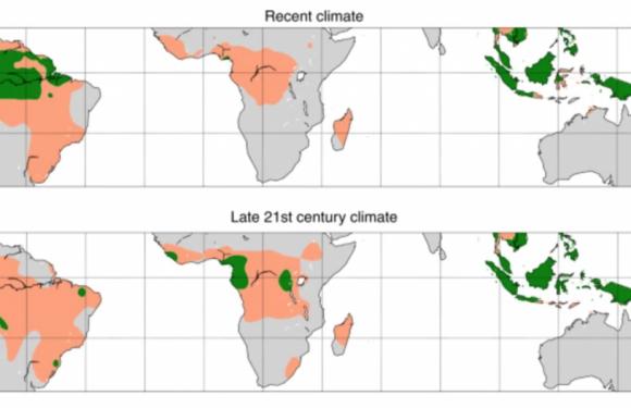 Crisi climatica e disboscamenti, l'Amazzonia vicina a un punto di svolta: da foresta pluviale a savana