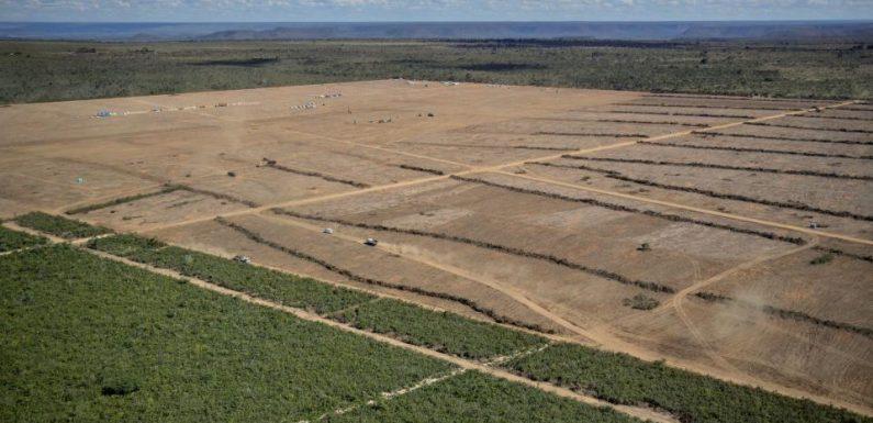 La soia è il nuovo olio di palma. L'impatto ambientale del biocarburante