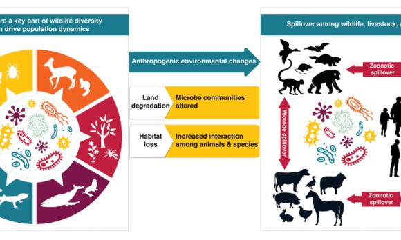 La via della biodiversità per uscire dall'era delle pandemie