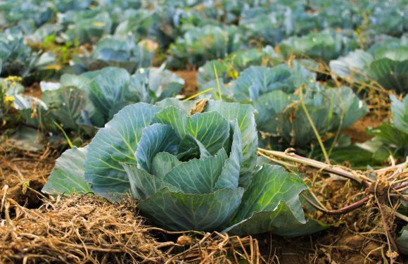 La legge sulla biodiversità agricola e alimentare compie cinque anni. Un bilancio