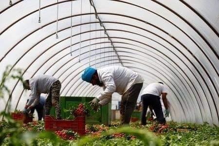 Il progetto per la dignità e i diritti dei lavoratori nelle campagne dell'Agro Pontino