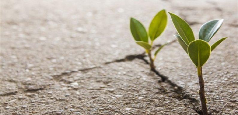 Culle di cemento – La Pandemia non ferma il consumo di suolo