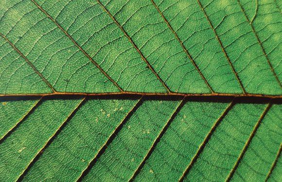"""La """"regia verde"""" del nuovo governo, tra aspettative e realtà"""