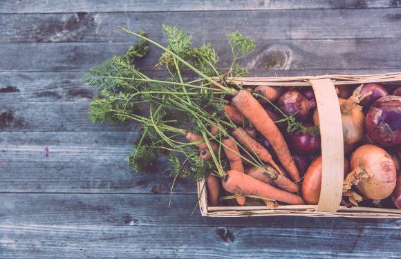 Nutrire la Terra: la transizione ecologica parte dal cibo