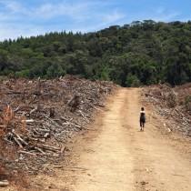 Rifondazione: Cingolani e la transizione ecologica targata Confindustria