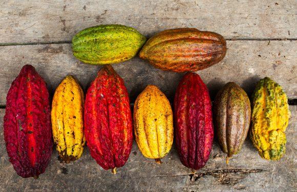 Il lato (ancora) oscuro del cioccolato e l'alternativa del commercio equo