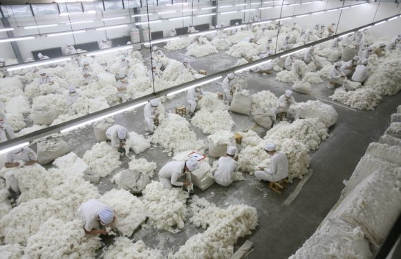 Ovs rinuncia al cotone prodotto dal lavoro forzato degli uiguri. Chi manca all'appello