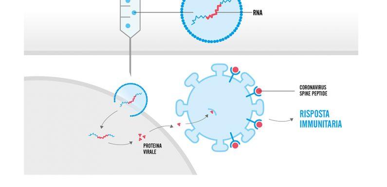 La tecnologia mRNA usata per i vaccini anti COVID e le possibili future applicazioni dal cancro alle malattie genetiche