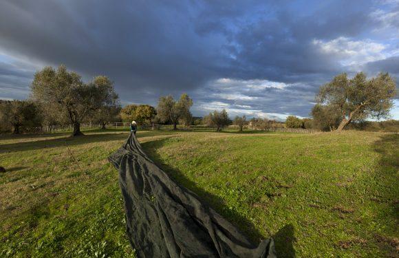 Canali etruschi tra i campi: racconti di agricoltura che tutela la storia