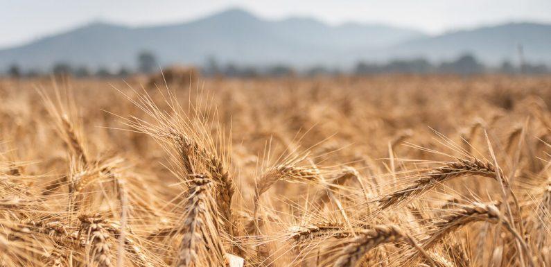 """Un convegno su """"Cambiamenti climatici e crisi alimentare: le sfide nel Secolo in un destino che ci accomuna"""""""